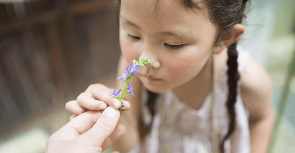 Aromas para os pequenos