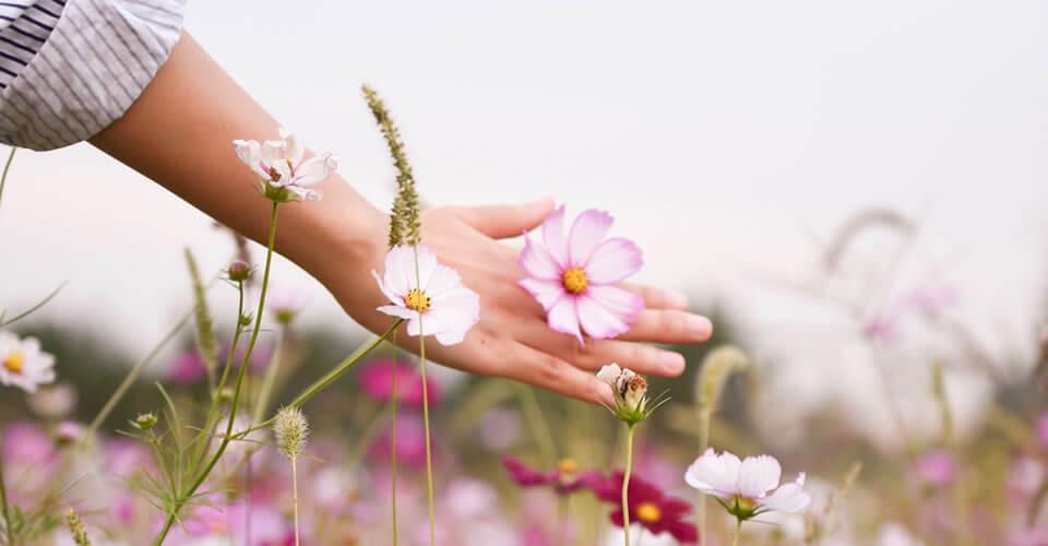 Os arquétipos das flores mostram o caminho