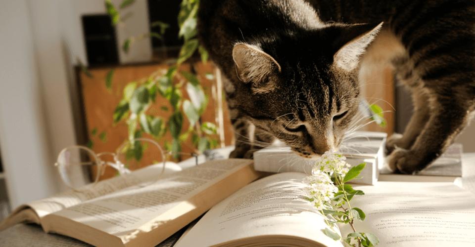 Aromaterapia: Aliada dos PETs