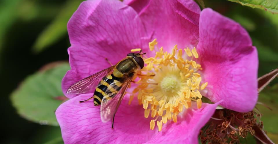 Curso aprenda a usar os florais de Bach Healingherbs: instrumento importante de autoconhecimento